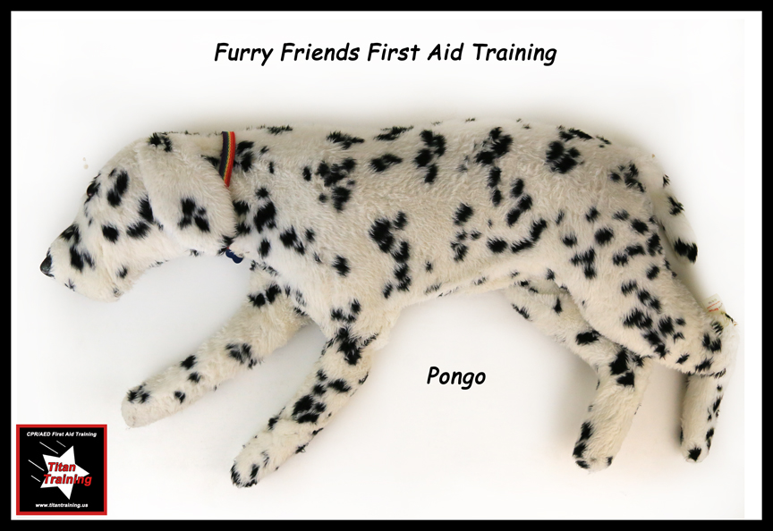 Furry Friends First Aid Training