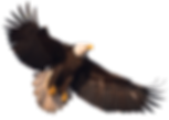 eagle_PNG1236.png