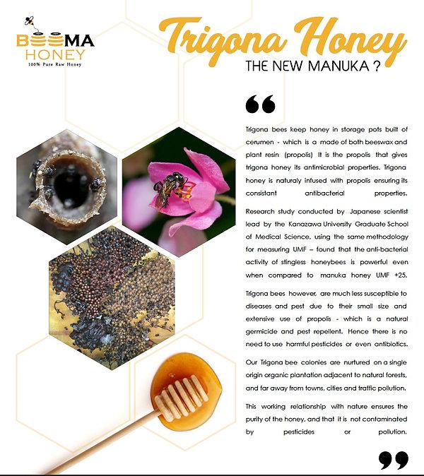 Trigona Stingless Bee Honey