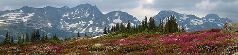 peaks and flowers.jpg