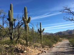Saguaro You Today?