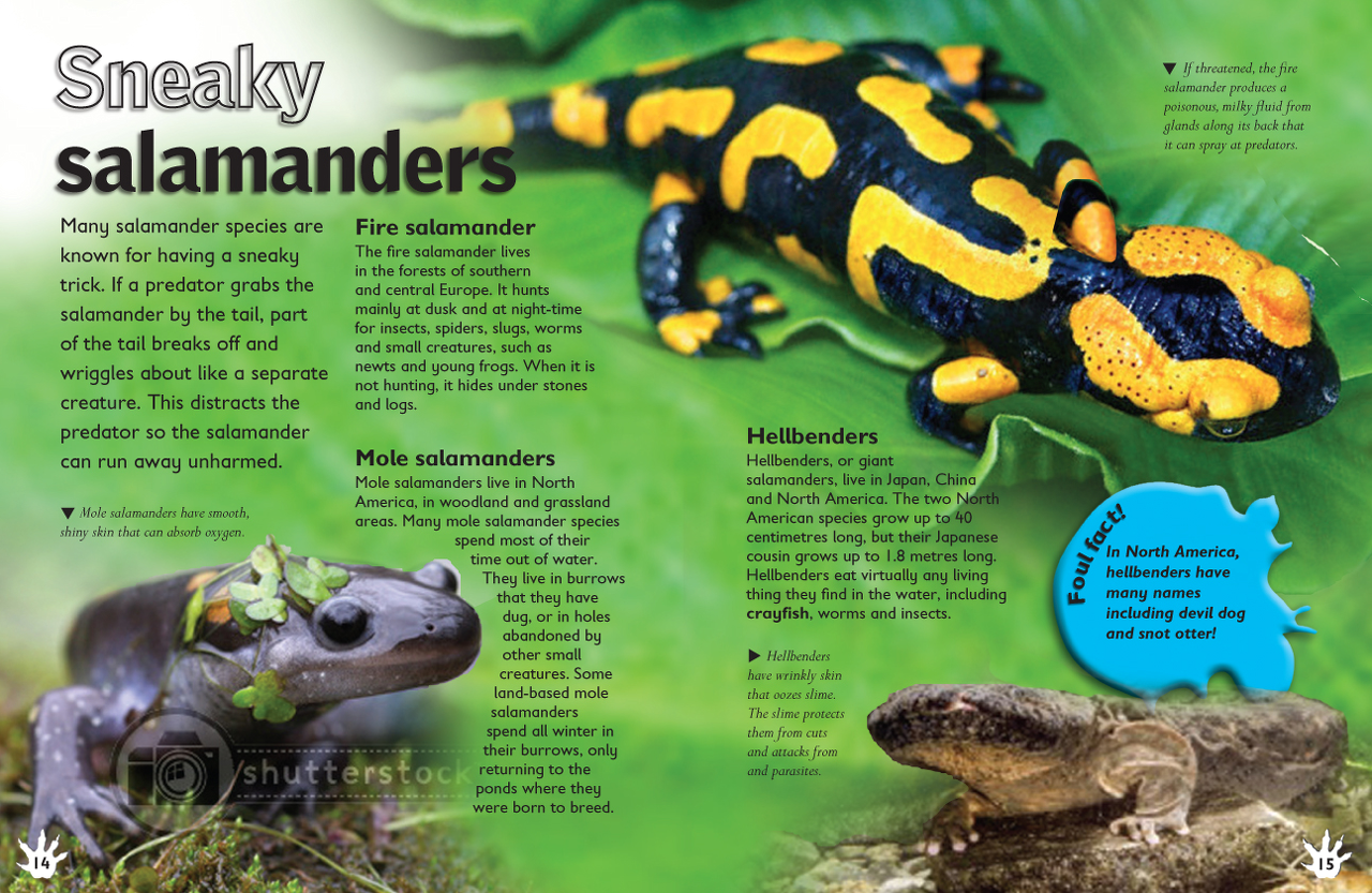 14_15_Salamanders