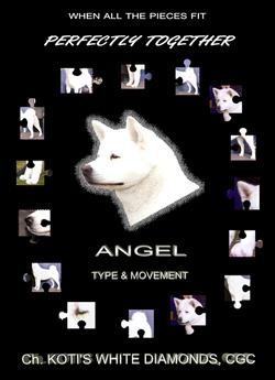 Angel's May 2008 ad 10x14pg1png