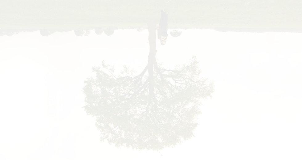 Website boom achtertrond2.jpg