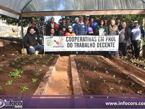 Cooperativas trabalham na horta do Hospital São Gabriel