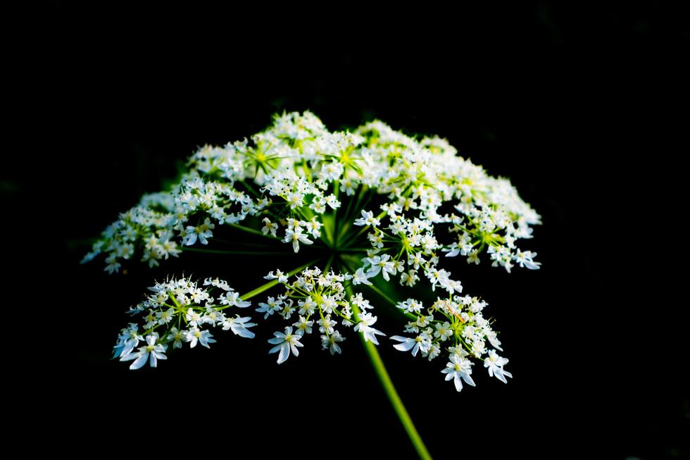An Uneditied Flower, California