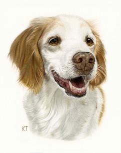 8x10 inch pet portrait