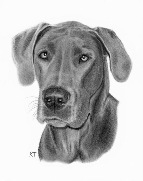 8x10 inch graphite pet portrait