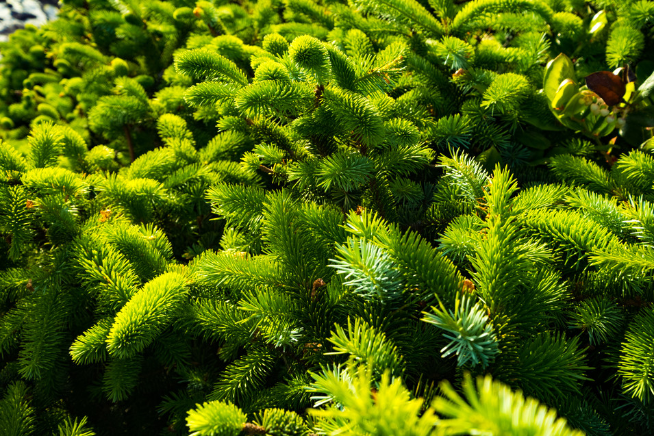Green Foilage, California