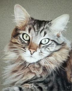 8x10 colored pencil pet portrait