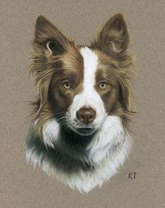 Colored pencil pet portrait.jpeg