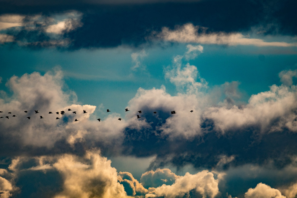 Flying Geese, California
