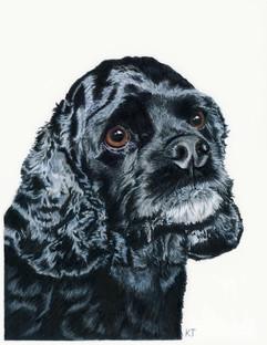 11x14 inch pet portrait