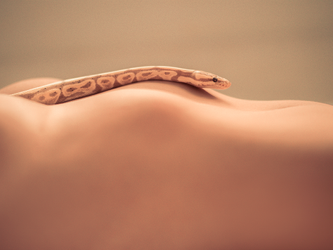 Snake/Skin