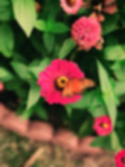 benigno-hoyuela-Y0oiOJKyx7o-unsplash_edited.jpg