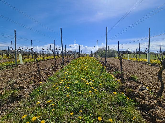 dyrehøj vingård