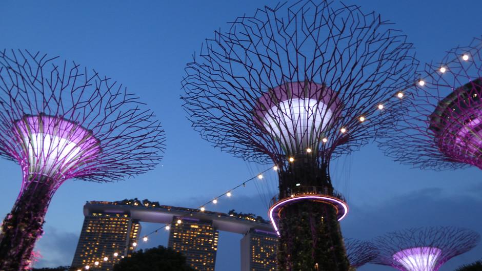 Zero Waste Singapore Guide