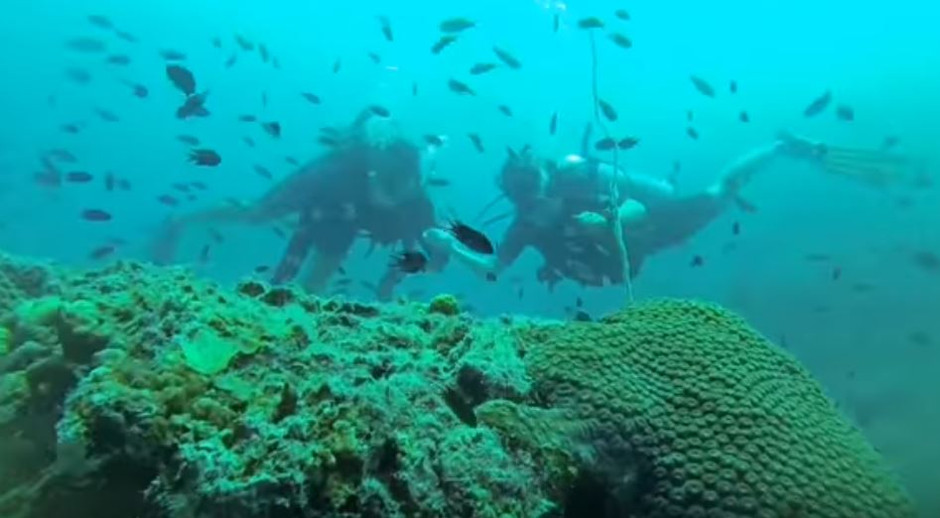 Eco-friendly Diving in Koh Tao: New Heaven Dive School
