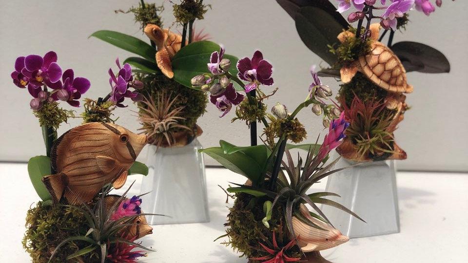 Small Orchid Arrangements