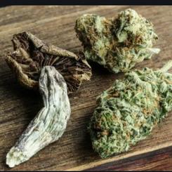 Cannabis, Delic & Wellness Brand Partnerships
