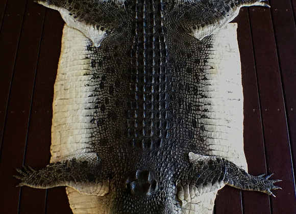Unique Crocodile Full  Floor and Wall Skins