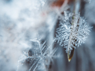 Dharma Acupuncture announces winter solstice treatment special
