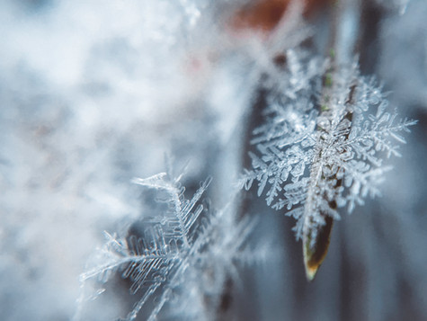 Thriving in Winter with Ayurveda
