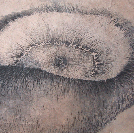Inner side of mushroom