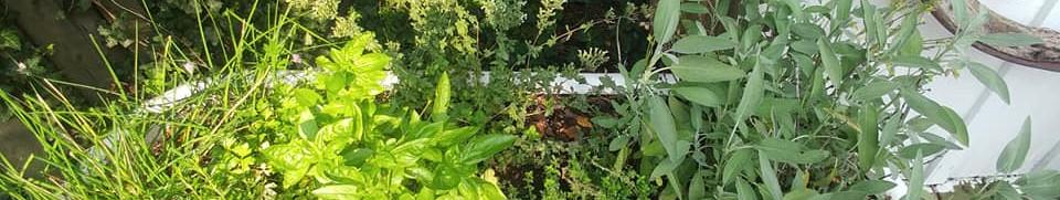 Tea Herbs Bath