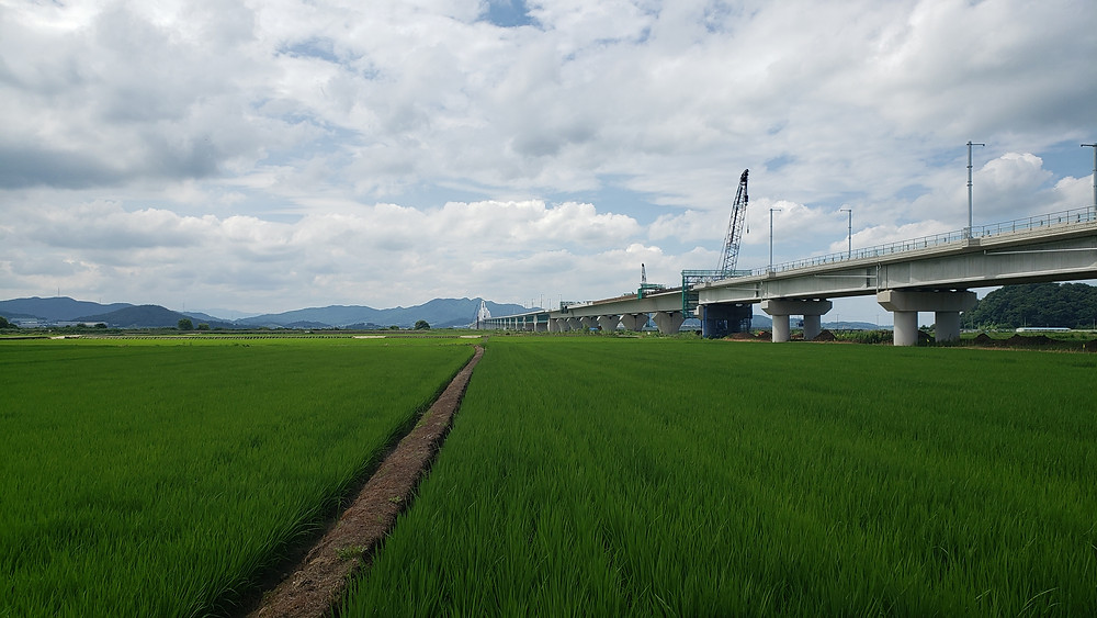 Rice fields stretch to the horizon. A bridge crosses the fields on the right.