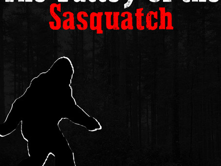 Valley of the Sasquatch, to view, or not to view?