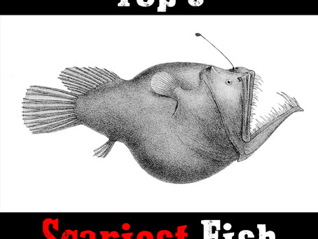 A quick guide to the 5 of the scariest fish in the world.