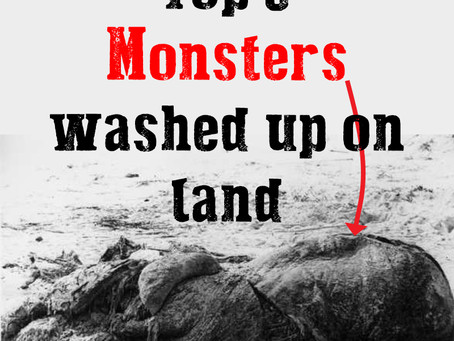 Top 3 Monsters washed up beside rivers and on beaches