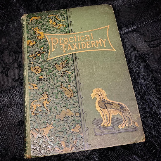 Practical Taxidermy - Victorian Book
