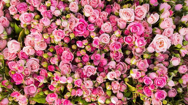 roses high res.jpg