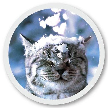 266 Snowcat