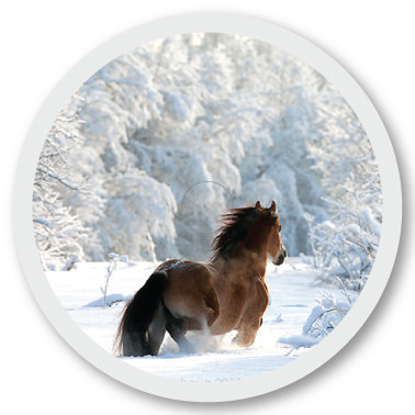 264 Snow horse