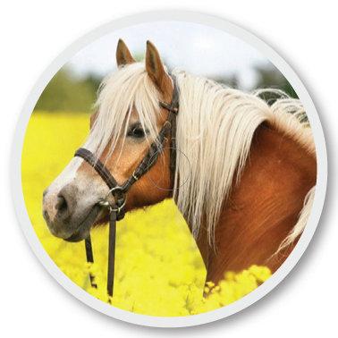 107 Horse sticker (klistermärke till Freestyle Libre sensor)