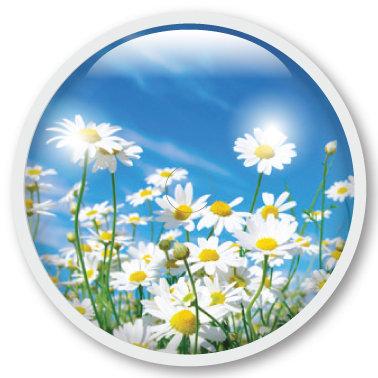 186 Summer flowers