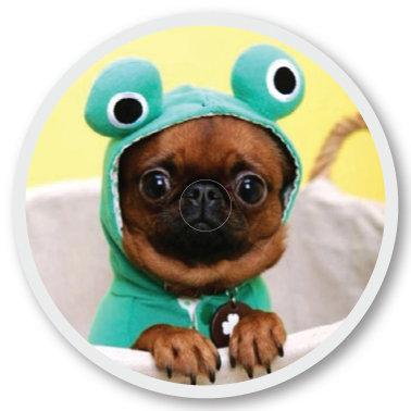 106 Dogfrog sticker (klistermärke till Freestyle Libre sensor)