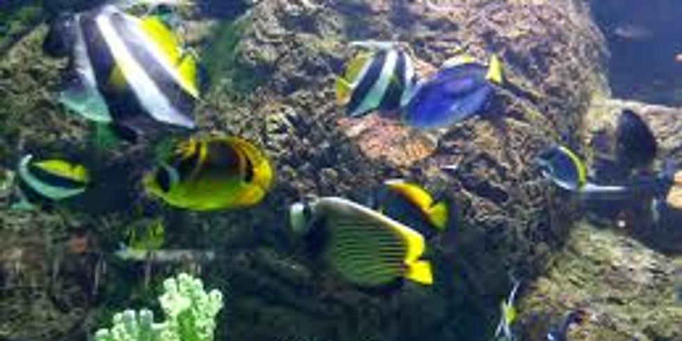 FBCC Students - Aquarium of the Pacific