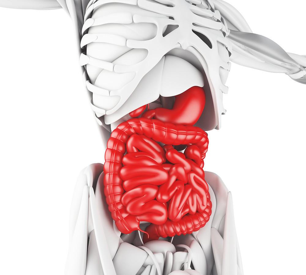 Concientización sobre la prevención de enfermedades digestivas
