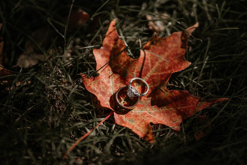 wedding rings on maple leaf