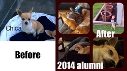 2014 happy tails