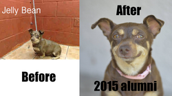 2015 happy tails