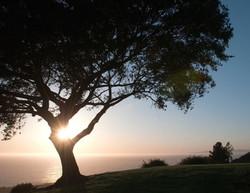 los verdes gold course pic tree