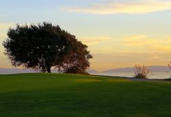 palos verdes golf course tree