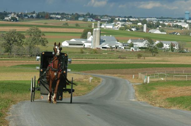 Horse Buggy Better.jpg