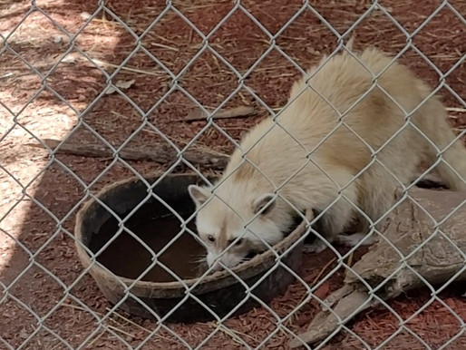 Feds cite Animal Gardens Petting Zoo for missing records, dilapidated enclosures and unsafe fencing