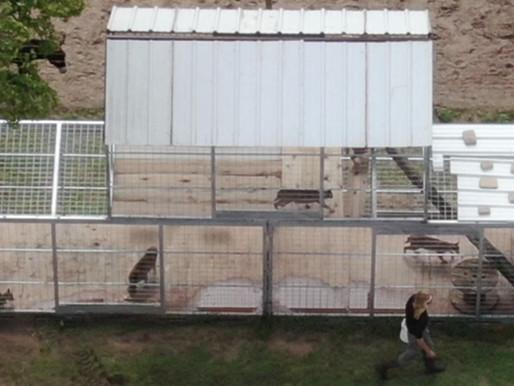 Animals left behind; some released after feds raid Tiger King Park